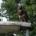 buizerd van het dassenbos